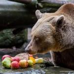 Medvědí Vánoce 2018, Schwarzenberská granátnická garda, Foto/zdroj: Lubor Mrázek